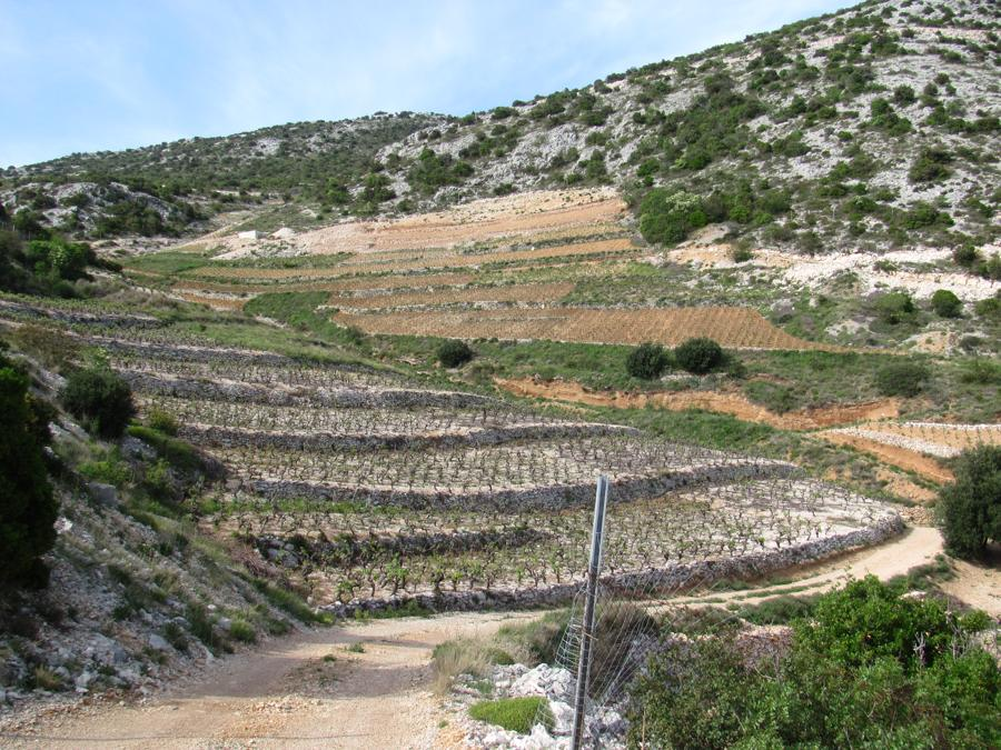 Peljesac Winery (6)