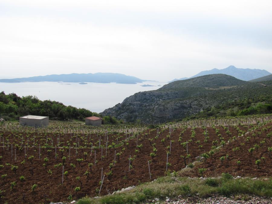 Peljesac Winery (7)