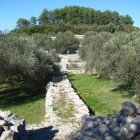 A ride amongst the olive trees