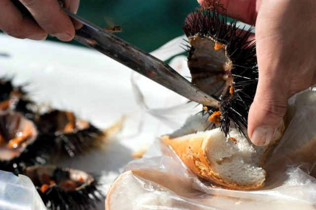 What to eat on Korcula - Urchin