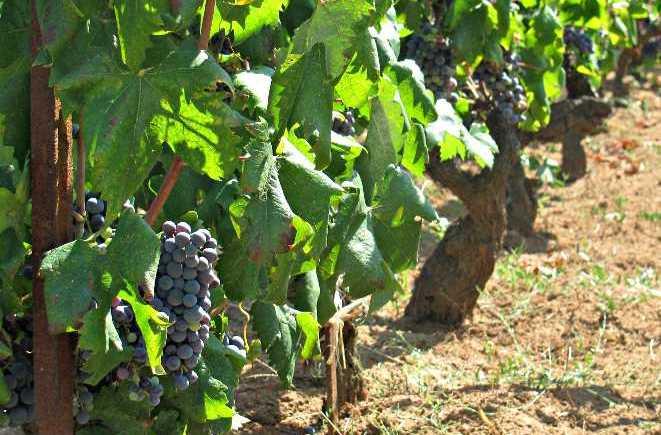 Wine Tasting on Korcula Island
